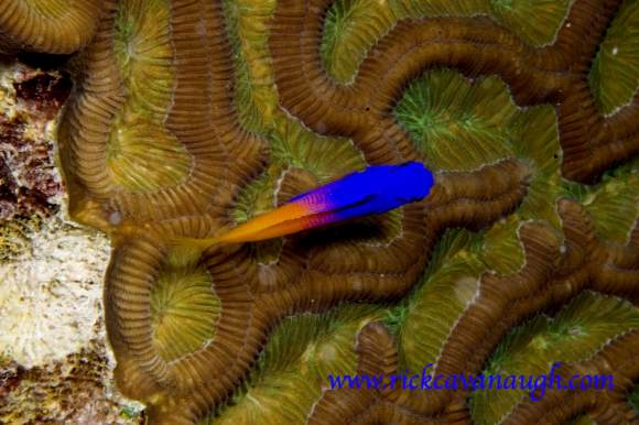 Fish Pictures from Utila